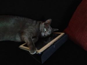 "Nora, la mia gatta, ovvero ""the cat is on the ... tablet""."